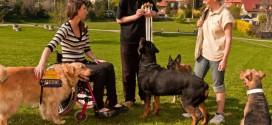 O dotace mohou konečně usilovat organizace, které cvičí asistenční psy