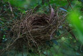 Jak vylétnout z hnízda?