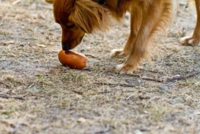 Můj pohled na výživu psů